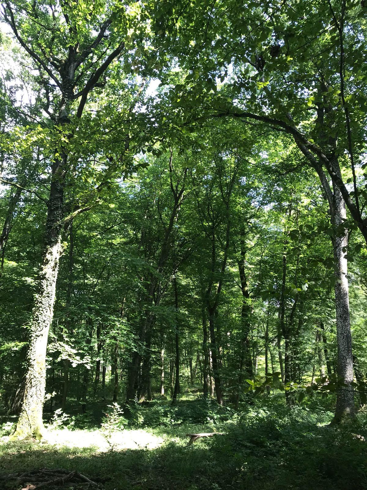 arbres qui seront arrachés