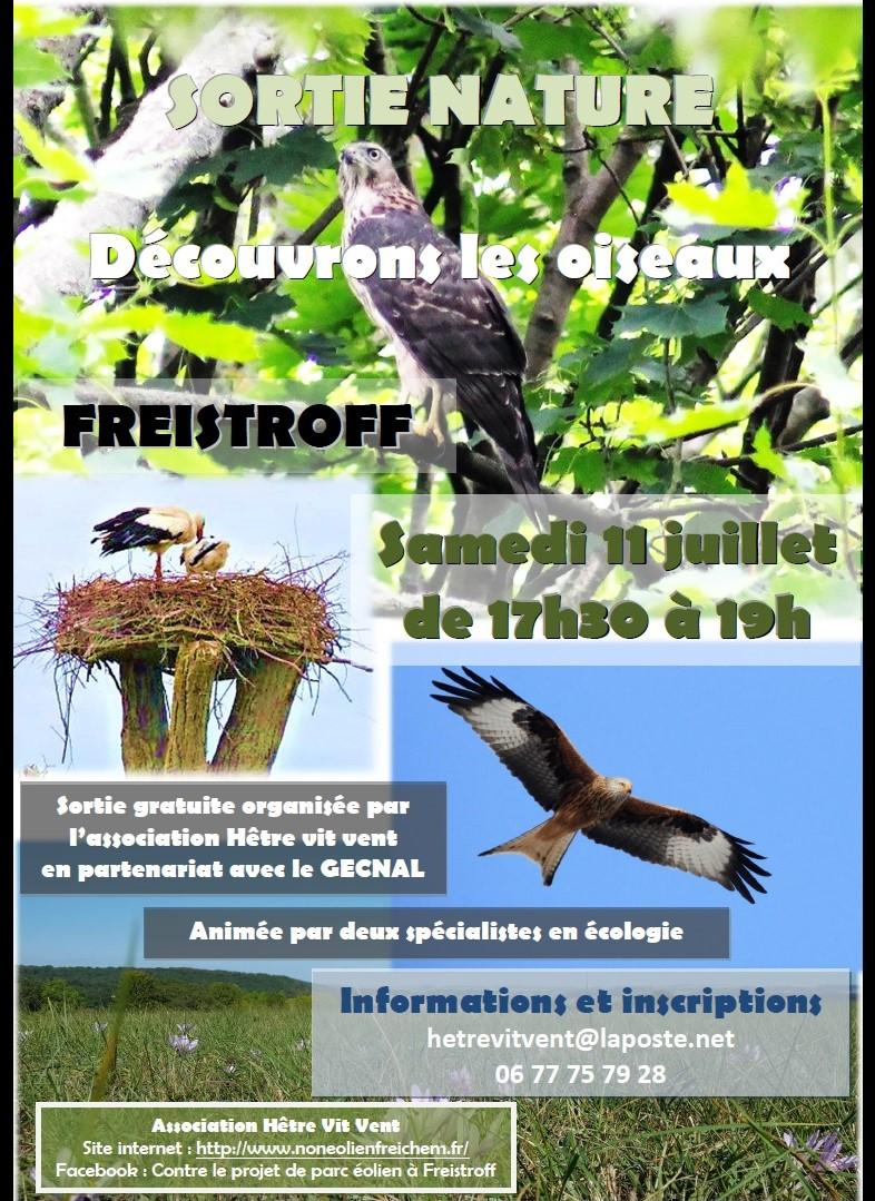 Photo flyer sortie oiseaux